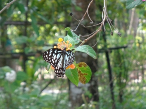 Butterfly garden Coconut Lagoon