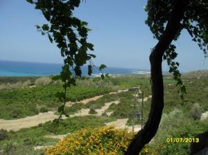 Southern Cyprus in the Akamas region