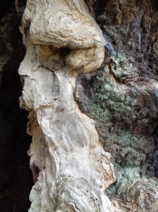Oak Tree face
